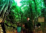 寒冷的森林逃脫
