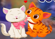 Lovely Couple Cats Escape