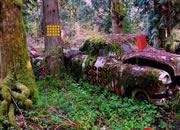 废弃汽车森林逃离