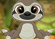 Dexterous Little Sloth Escape