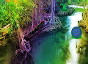 Rising Mangrove Forest Escape