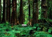 Grove Hidden Wild Escape