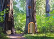 森林树逃脱